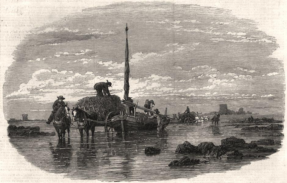 Associate Product Sketches of the Calais fetes. Carting the Vraic. Pas-de-Calais, old print, 1852