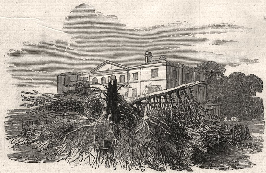 Associate Product Cedar struck by lightning, at Henley-upon-Thames. Oxfordshire, old print, 1852
