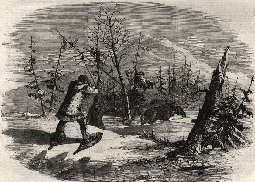 Associate Product Moose hunting in Canada. The attack. Canada, antique print, 1858