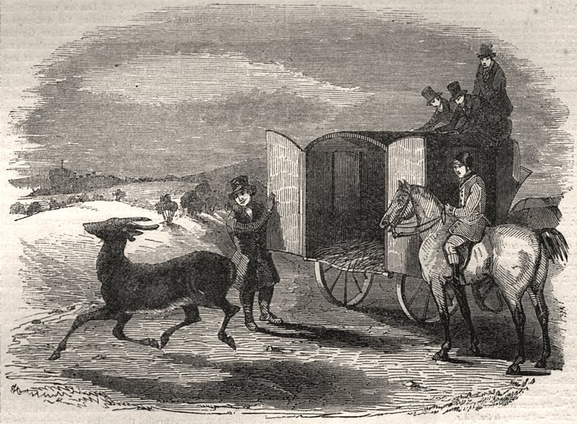 Associate Product Uncarting the stag. Deer, antique print, 1843