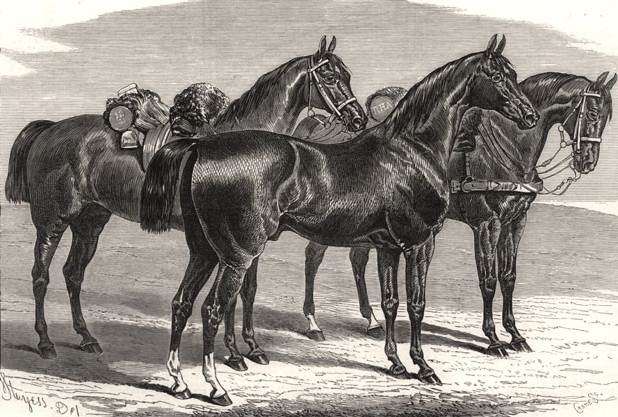 Associate Product Manchester International Horse Show: Military troop Lancer charger, print, 1875