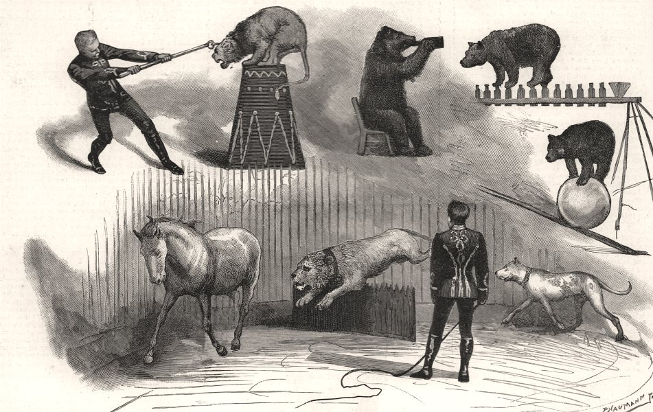 Associate Product Christmas circus at Covent-Garden Theatre. London. Bears lions horses, 1890