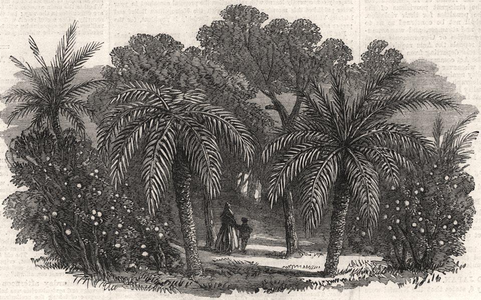 Associate Product Orange Grove. Valencia, antique print, 1866