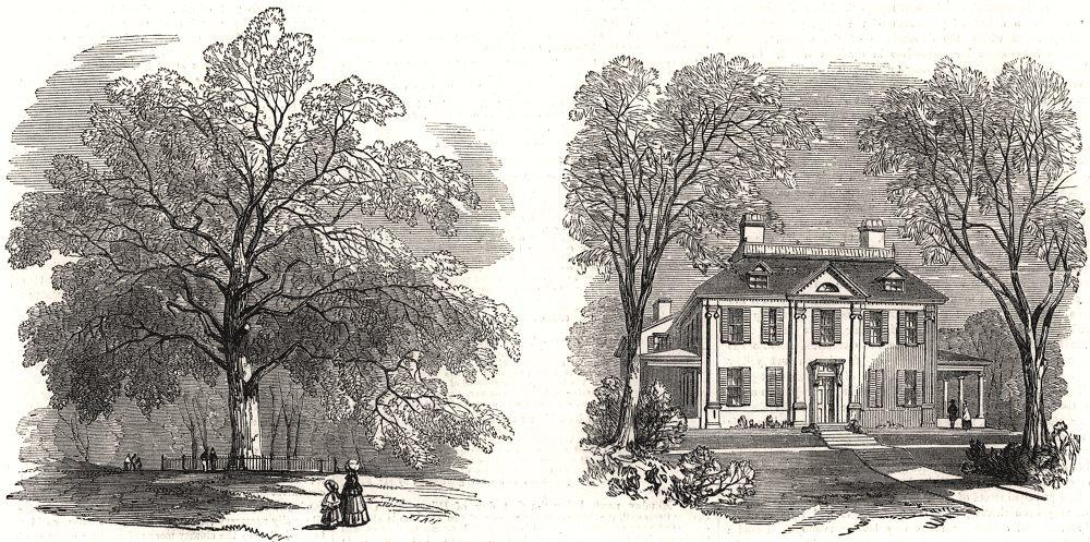 Associate Product Liberty Tree Boston Common Longfellow's House old Cambridge. Massachusetts, 1858