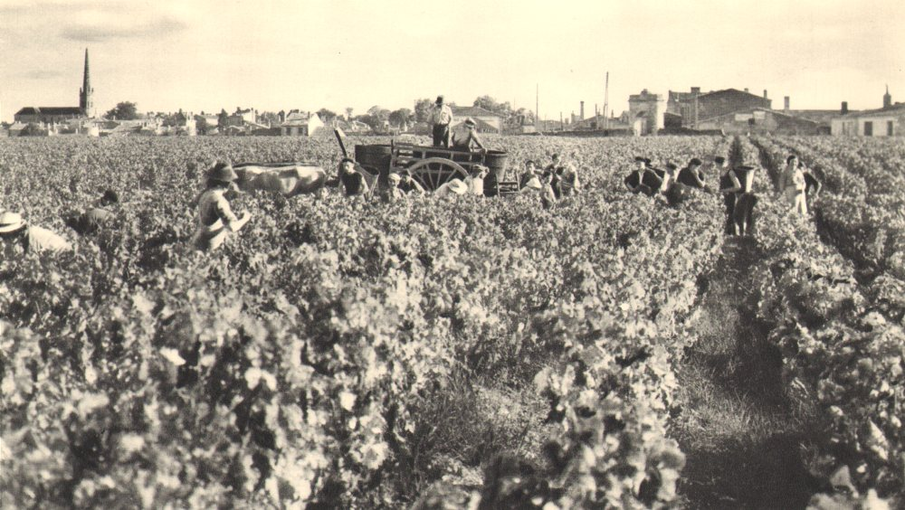 Associate Product BORDEAUX WINE. Vendanges dans les Grands Crus. Grape harvest - vineyard 1949