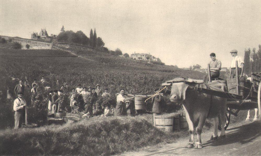 Associate Product BORDEAUX WINE. St Emilion - Chateaux, Domaines, Grands Crus 1949 old print
