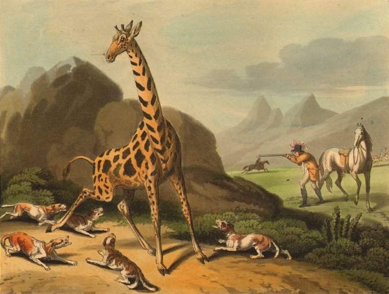 Associate Product AFRICA. Hunting the Camelopard (Giraffe) . Rifle. Dogs (Edward Orme)  1814