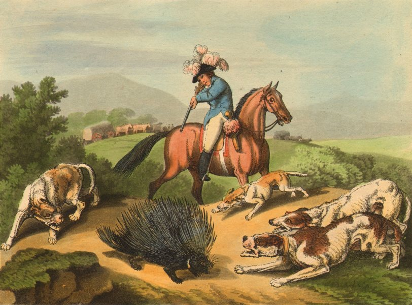 Associate Product AFRICA. Shooting Porcupine. Horse. Dogs. Wagon. Rifle (Edward Orme)  1814