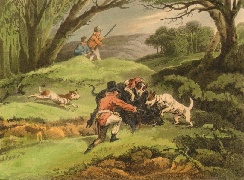 Associate Product GERMANY. Wild Boar attacking the Hunters. Dogs. Rifle.  (Edward Orme)  1814