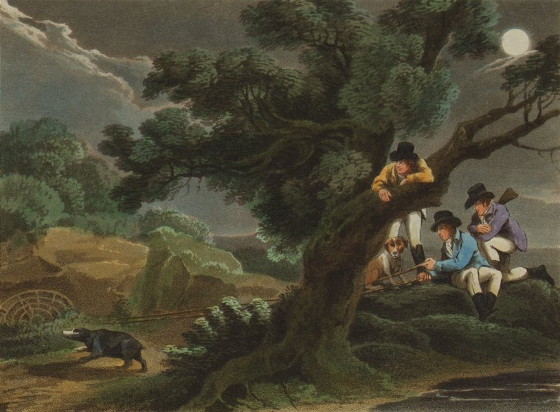 GERMANY. Catching the Badger using a net.  (Field Sports- Edward Orme)  1814