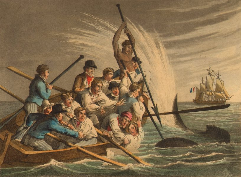 Associate Product SHARK ATTACK. Killing a Great White. Boat harpoon Ship.  (Edward Orme)  1814