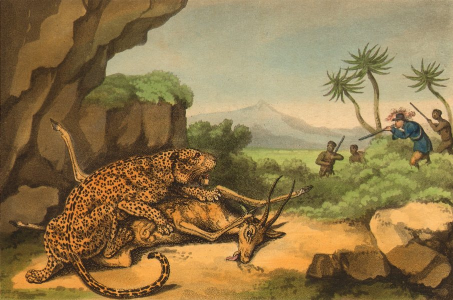 Associate Product AFRICA. Shooting a Leopard eating Antelope (Field Sports- Edward Orme)  1814