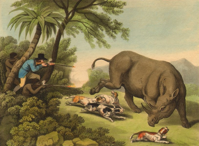 Associate Product RHINOS. African rhino- hunt. Dogs. rifles.  (Field Sports- Edward Orme)  1814