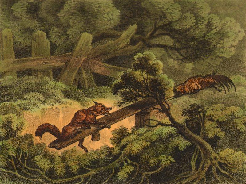 Associate Product GERMANY. German Fox Trap. Carrion bait (Field Sports- Edward Orme)  1814 print