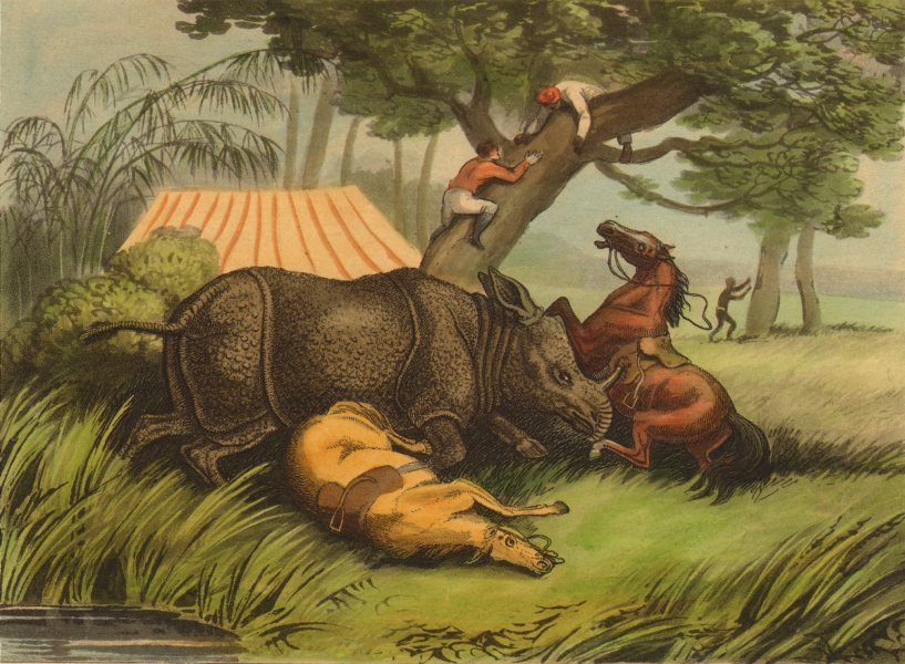 Associate Product INDIA. Rhinoceros attacking horses. Hunters climbing tree. Tent (Orme)  1814