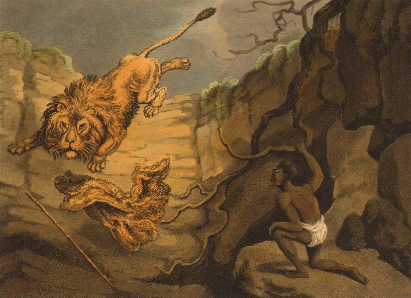 Associate Product SOUTH AFRICA. Hottentot Khoikhoi killing lion with krosse cloak (Orme)  1814