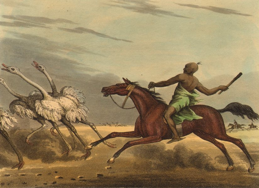 Associate Product ARABIA. Arabs hunting Ostriches on horseback with stick (Edward Orme)  1814