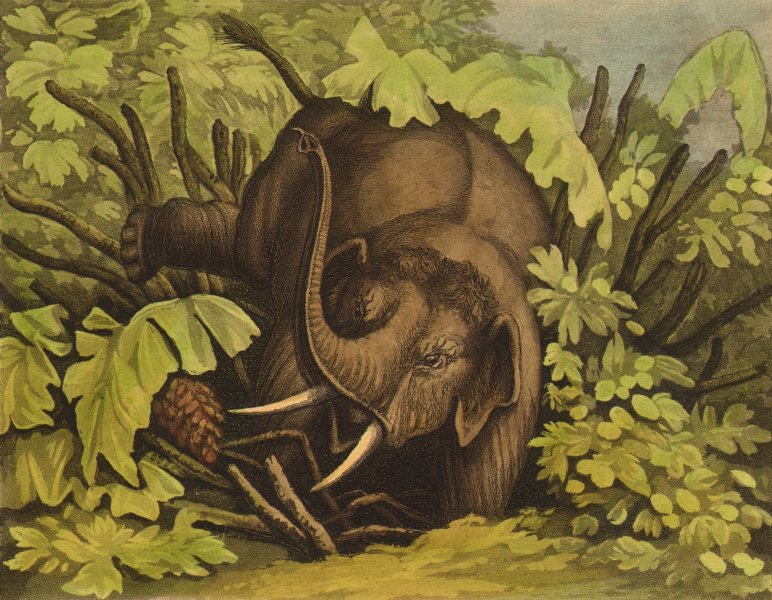 Associate Product AFRICA. Elephant in the Pitfall (Field Sports- Edward Orme)  1814 old print