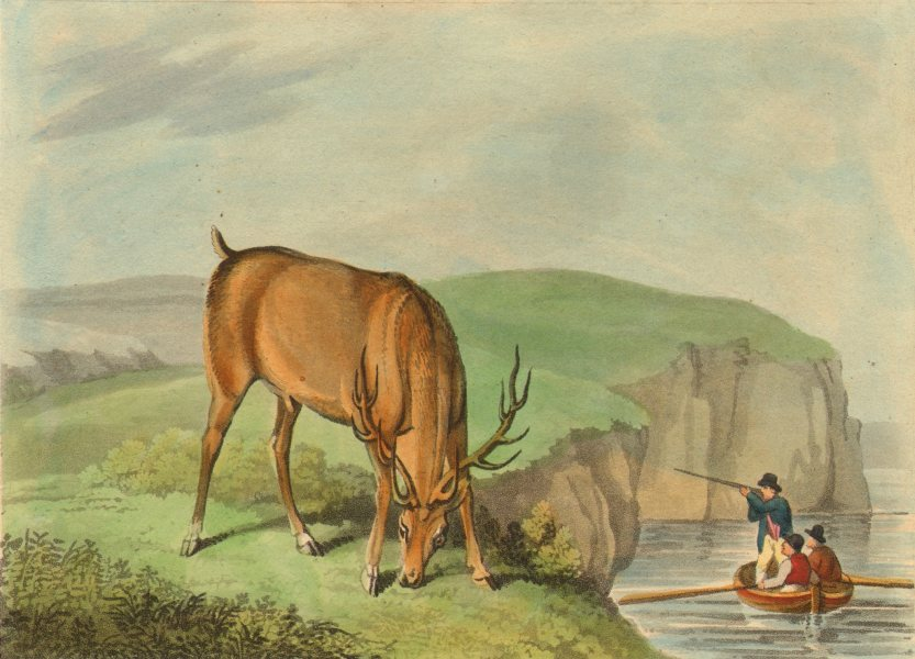 MILITARIA. Sailors shooting a Wild Stag deer from boat (Edward Orme)  1814