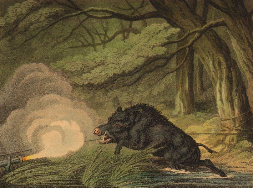 Associate Product GERMANY.Wild Boar Trap.Rope trigger matchlock(Field Sports-Edward Orme) 1814