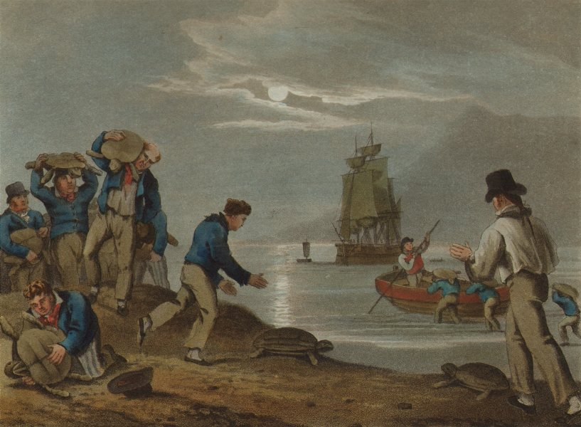 Associate Product TURTLES. Sailors turtle- catching on Land. Sailing ship boat (Orme)  1814