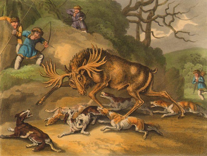 ARCTIC. hunt Elk bow arrows dogs (Field Sports- Edward Orme)  1814 old print