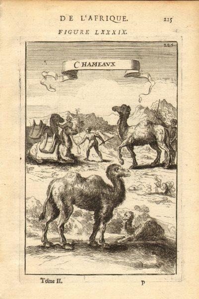 Associate Product CAMELS. 'Chameaux'. Nubia. Sudan. Egypt. MALLET 1683 old antique print picture