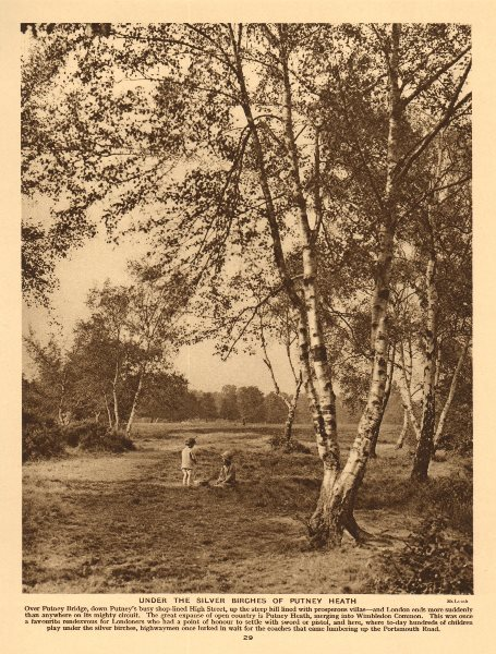 Associate Product Under the silver birches of Putney Heath 1926 old vintage print picture