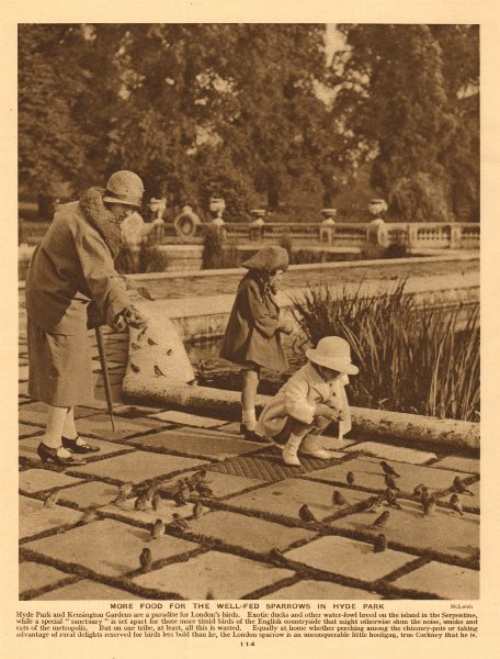 Associate Product Children feeding sparrows in Hyde Park 1926 old vintage print picture