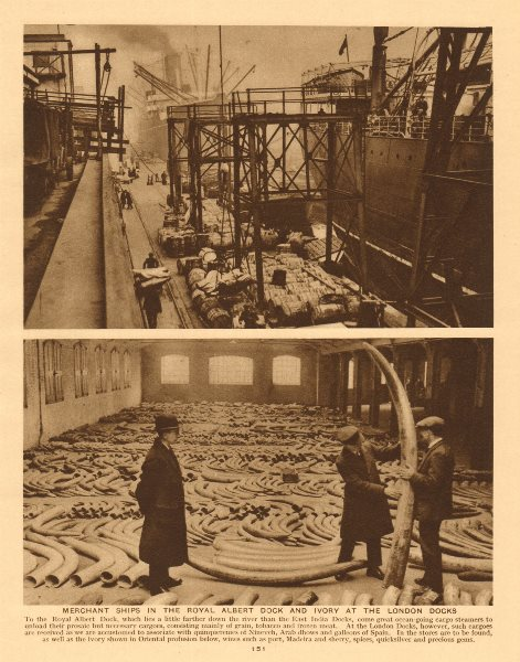 Associate Product Merchant ships in the Royal Albert Dock and ivory at the London Docks 1926