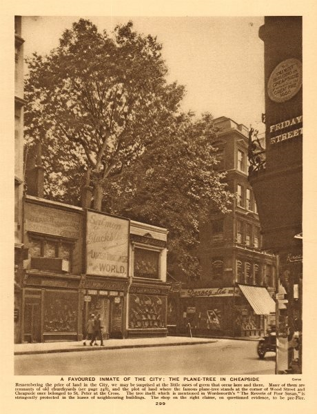 Associate Product The plane-tree on the corner of Cheapside & Wood Street 1926 old vintage print
