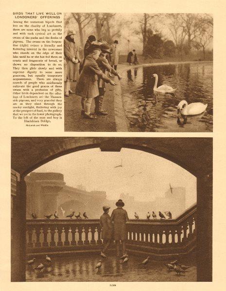 Associate Product Children feeding Swans, Serpentine. Pigeons near Blackfriars Bridge 1926 print