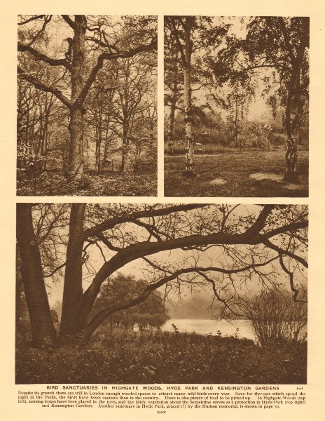 Associate Product Bird sanctuaries in Highgate Woods, Hyde Park & Kensington Gardens 1926 print