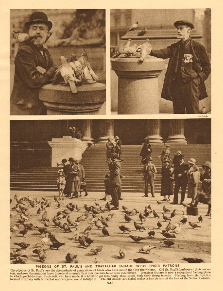Associate Product Pigeons of St. Paul's and Trafalgar Square with their patrons 1926 old print