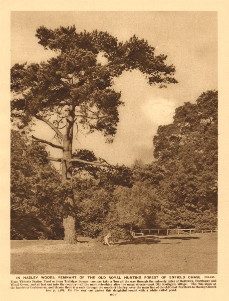 Associate Product In Hadley Woods, the Royal hunting forest of Enfield Chase 1926 old print