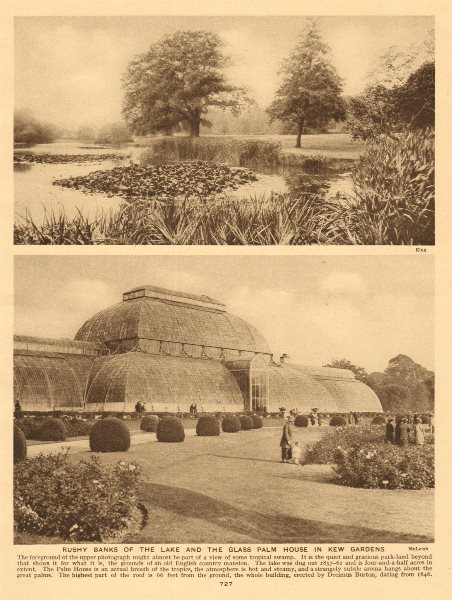 Associate Product Rushy banks of the lake and the glass Palm House in Kew Gardens 1926 old print