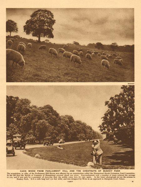 Associate Product Caen Wood/Kenwood from Parliament Hill w/ sheep. Bushey Park chestnut trees 1926