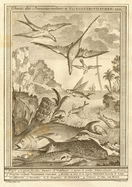 Associate Product 'Chasse de poissons volans'. Birds hunting flying fish South Africa. SCHLEY 1747