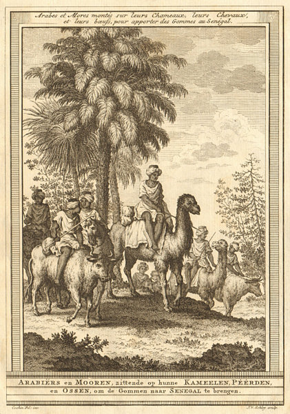 Associate Product Arabs & Moors on camels horses cattle bringing gum arabic to Senegal SCHLEY 1747