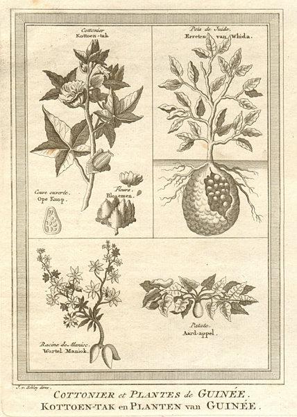 Associate Product 'Cottonier & plantes de Guinée'. Cotton & other West African plants. SCHLEY 1747