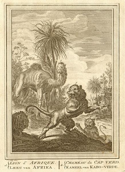 Associate Product 'Lion d'Afrique, Chameau du Cap-Verd'. African Lion. Camel. Senegal. SCHLEY 1747