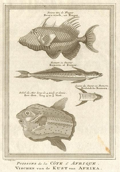 Associate Product West African Fish. Filefish. Remora or suckerfish. Ocean Sunfish. SCHLEY 1747