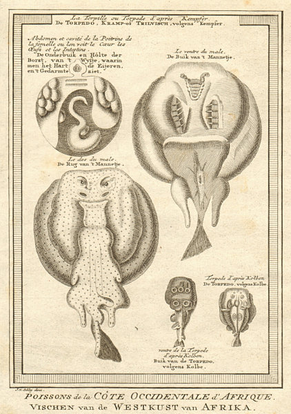 Associate Product West African fish. Torpedo or electric rays after Kempfer. SCHLEY 1747 print