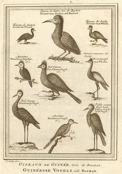 Associate Product Oiseaux de Guinée. West African birds Sestro Ouidah Guinea pheasants SCHLEY 1748