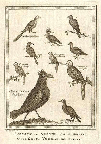 Associate Product 'Oiseaux de Guinée'. West African birds. Parrots. Cape Coast eagle. SCHLEY 1748
