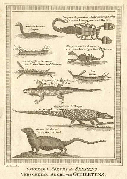 Associate Product West Africa. Serpents snakes reptiles worms scorpions iguanas. SCHLEY 1748