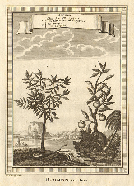 Associate Product 'Arbres; Cheu ku ou Goavas; Suping'. China. Trees; Guava; Suping. SCHLEY 1749