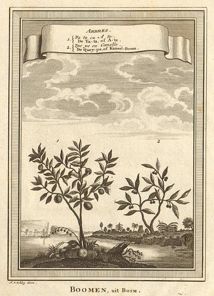 Associate Product China trees. Cinammon. Ata, Sugar/custard apple or sweetsop. SCHLEY 1749 print
