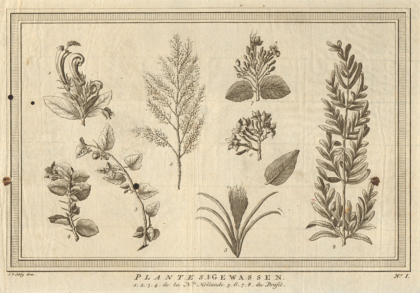 Associate Product Plants of Australia and Brazil. SCHLEY 1758 old antique vintage print picture
