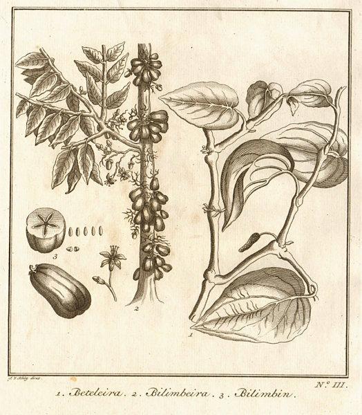 Associate Product Tropical fruit. Areca palm or Betel nut tree. Bilimbi tree & fruit. SCHLEY 1763